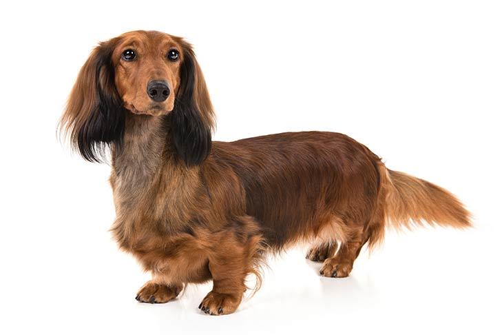 Cutest Dog Breeds