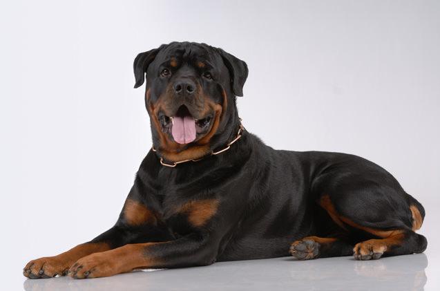 Largest-Dog-Breeds